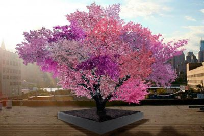 Tree of 40 fruits