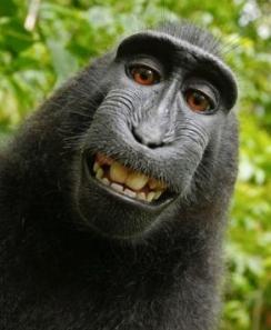 primate selfie
