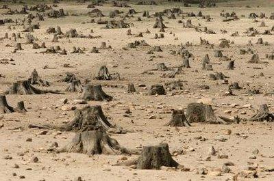 deforestation-tree-removal